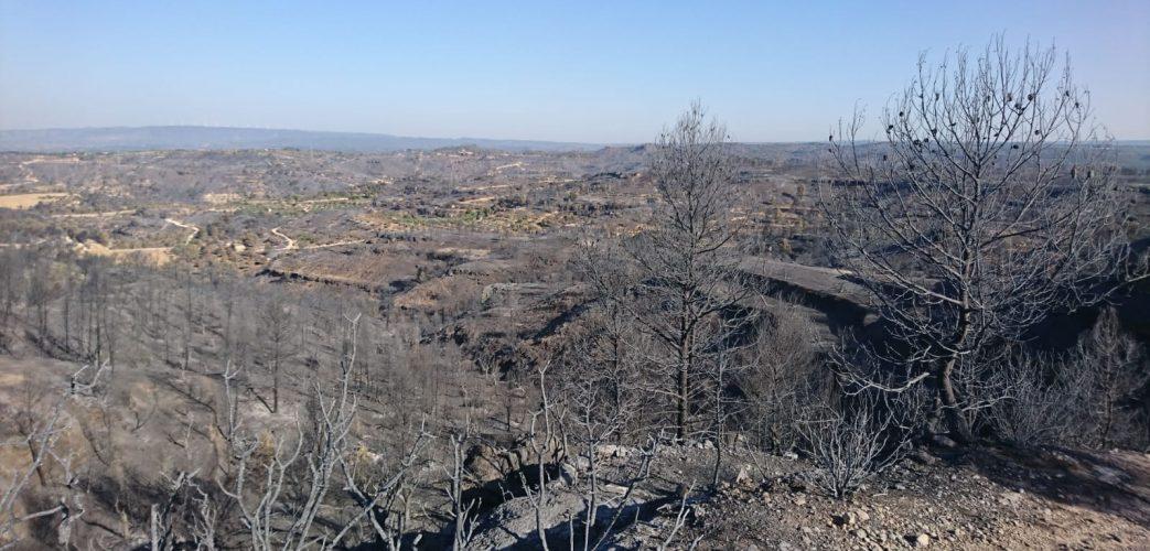 Vegetació cremada pel pas de l'incendi de la Ribera d'Ebre.
