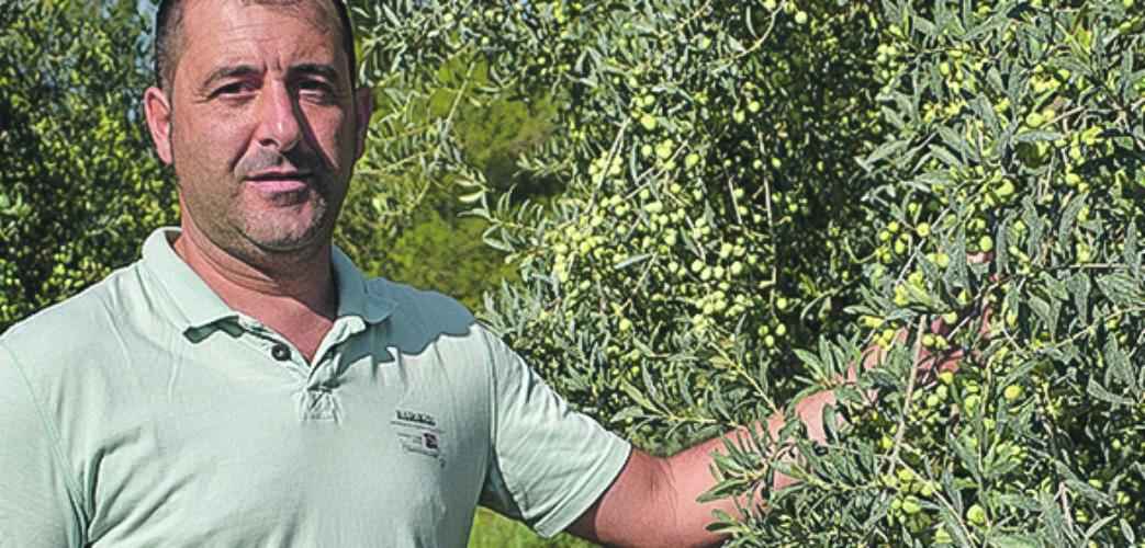 Jordi Pascual, responsable nacional del sector de l'Oli d'Unió de Pagesos.